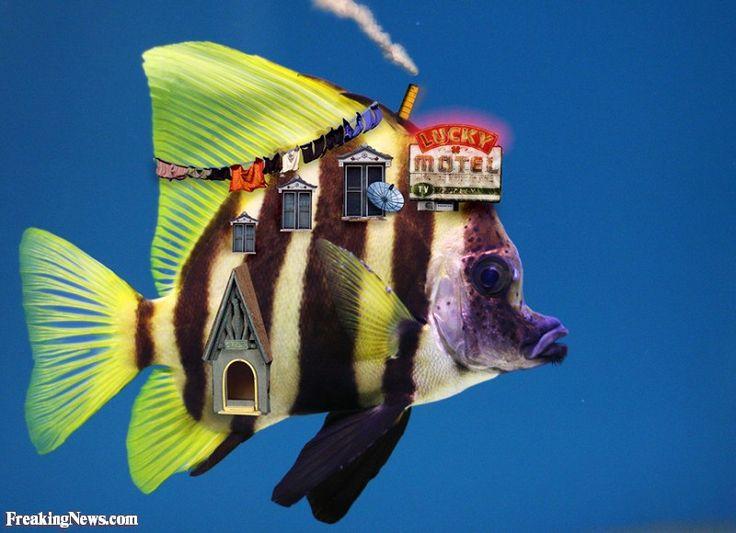 The Fish Motel