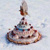 Foto's van Exclusieve vogeltaarten - Groetjes van Merel