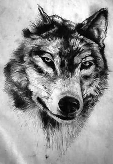 Wolf Head Drawing looks amazing as a tattoo