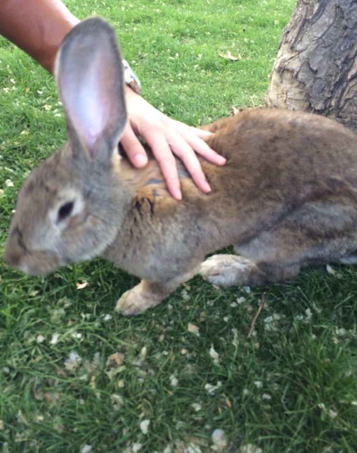 Кролик для развлечения гостей на день рождении / little rabbit for entertainment offers