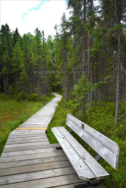 Algonquin Park Trails, Camping in Ontario, Spruce Bog Boardwalk #algonquinpark