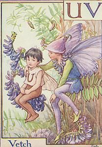 uV is For Vetch- by Cicely Mary Barker