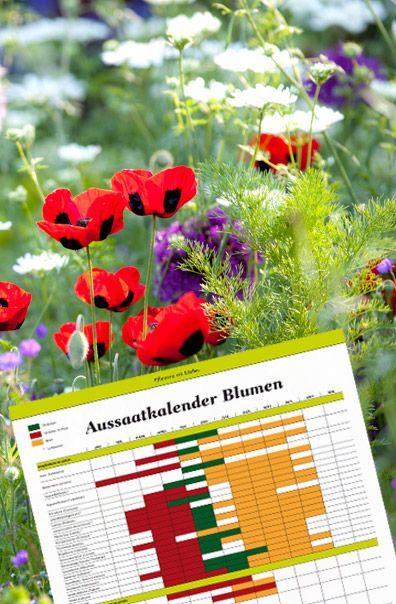 17 Best Ideas About Gartentipps On Pinterest | Daumen, Garten ... Garten Januar Was Ziergarten Tun