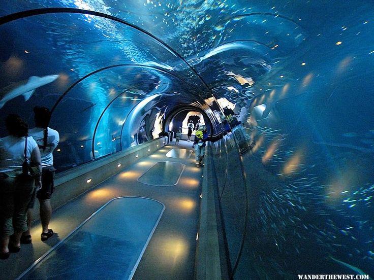 Shedd Aquarium -- Chicago, Illinois. United States, North America.