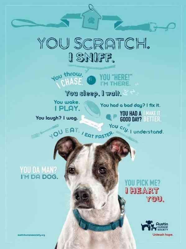 Animal Rescue Marketing Inspiration Charitypaws Austin Humane Society Animal Shelter Fundraiser Pet Adoption Center