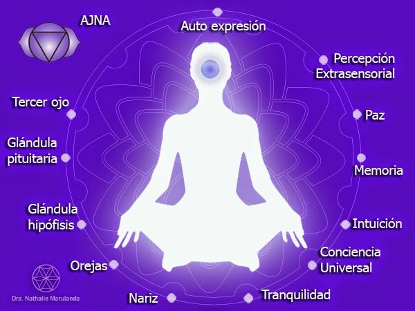 """El sexto chakra: Ajna ~ La Flor de la Vida - Medicina Integrativa.- mos iluminar nuestro pensamiento, nuestro ser. Localizado en el entre cejo, punto compartido por muchas culturas como centro de integración.  Es un chakra o centro de energía compuesto por 96 pétalos, lo que permite una unificación de los demás centros energéticos. Es como muchos autores lo refieren: """"la torre de control del sistema nervioso"""" visto desde la perspectiva energética.  En este centro nuestra intuición logra un…"""