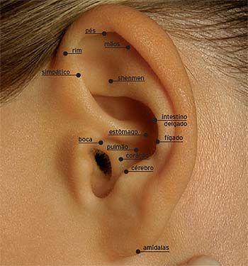 Puntos de auriculoterapia para adelgazar                                                                                                                                                                                 Más