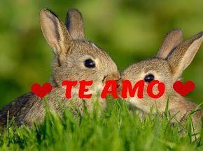 vídeos romanticos: Video De Amor Para Dedicar ♡ TE AMO ♡ Poema Hermos...