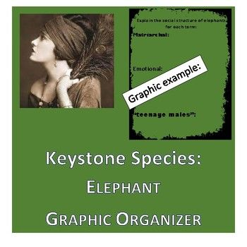 This 2 sided graphic organizer helps consolidate information concerning elephants and their vital role in their ecosystems, the threats to elephant survival as a species and the social structure of the herds. This page is wonderful for class, lecture, video or