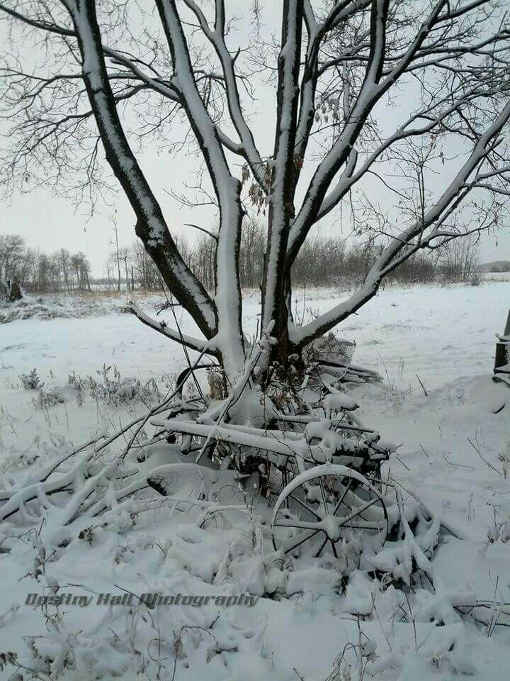 Snowy Farm Manitoba