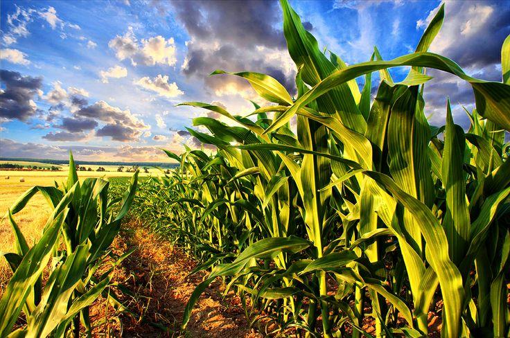 Porumb Gusto Pufuleti _ Corn