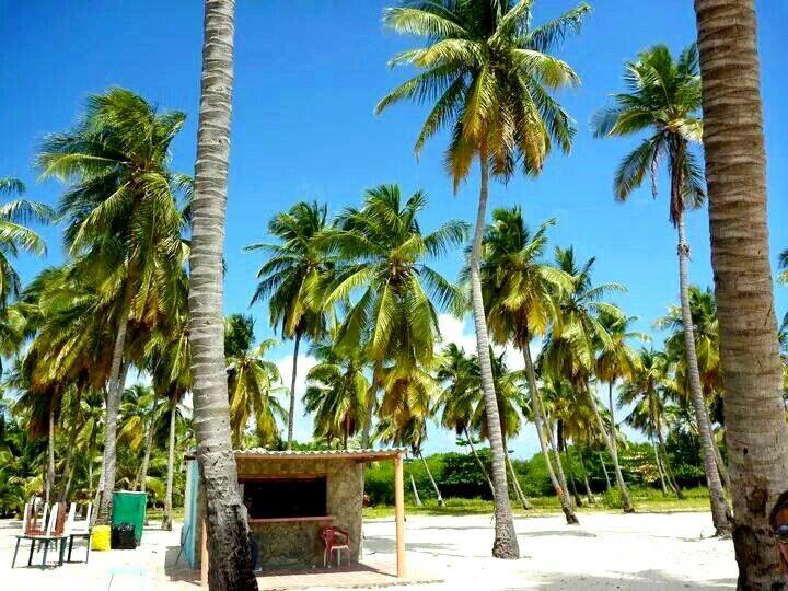 Chichiviriche Island Venezuela