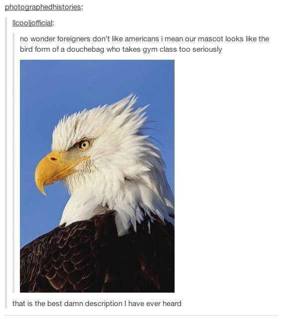 When someone dared to insult the bald eagle. | 17 Times America Got Burned By Tumblr