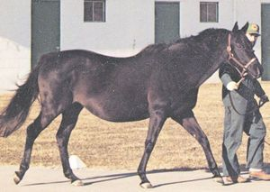 Once Double(1967)Double Jay- Intent One By Intent. 3x5x5 To Whisk Broom II, 4x5 To North Star III, 5x5 To Ben Brush. 19 Starts 2 Wins 1 Second 4 Thirds. $3,123. Dam Of John Henry.