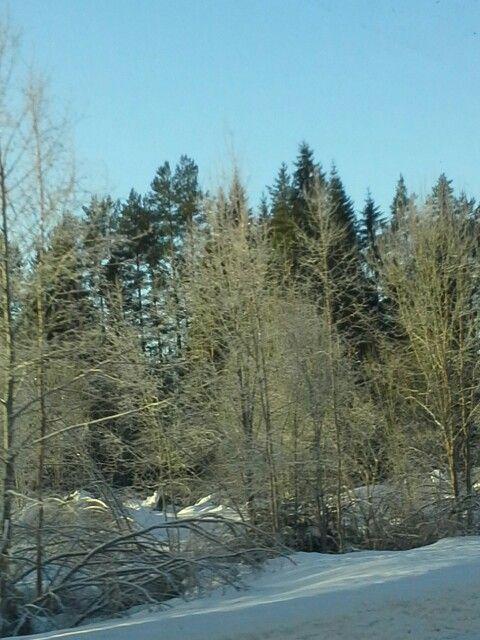 Talven kylmä ja kevään alkua