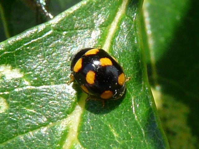 240 Best Bugs Images On Pinterest Butterflies Ladybugs And Beetles