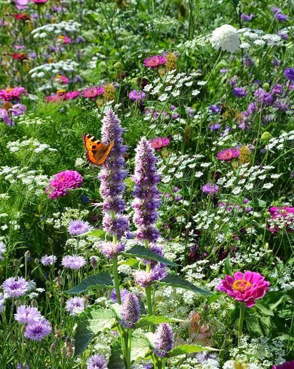 17 meilleures id es propos de jardins de cottage anglais for Jardin anglais pinterest