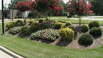 Roadside Landscaping Bushes Hillside Landscaping