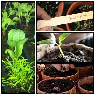 seed, grow, home, homesteding, farm, flowers, vege, nasiona, rozsada, warzywnik, zioła, kwiaty, byliny, ogród