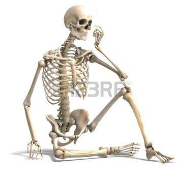 esqueleto humano 3D - Buscar con Google