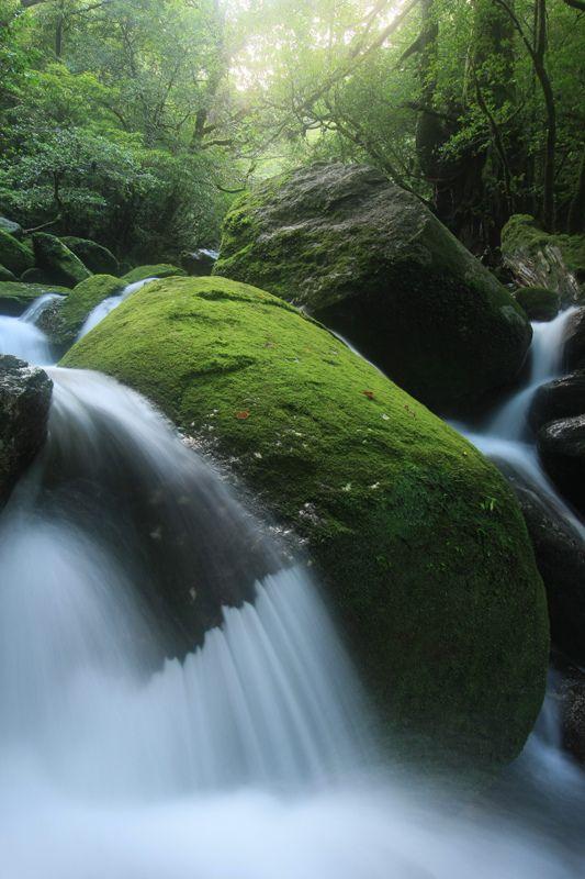 Mossy Boulder, Yakushima National Park, Japan