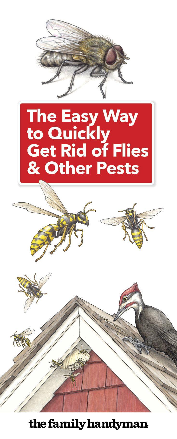 623b1412c658e171caa92db3b16cb91f - How To Get Rid Of Bees Flying Around You