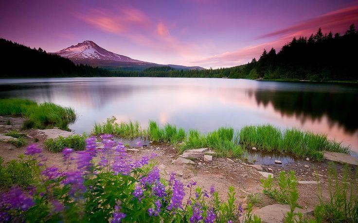 O lilás e o roxo juntamente com o reflexo da água ajuda a acalmar