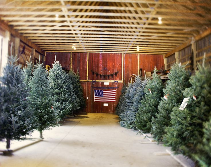242 best Christmas tree lot images on Pinterest | Christmas tree ...