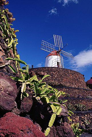 Cacti and windmill at Jardinn de los Cactus, Cesar Manrique's work of art, Lanzarote, Canary Islands, Spain, Atlantic, Europe