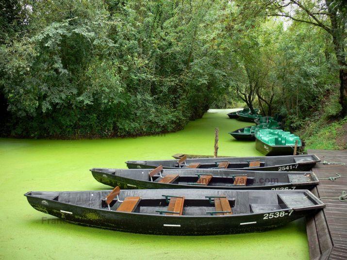 Paysages de Vendée : Marais poitevin (marais mouillé) : embarcadère, barques amarrées, conche (petit canal) de la Venise verte et arbres, à Maillezais