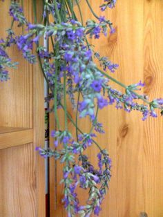 Adriana  Hobby: Parfumul plantelor