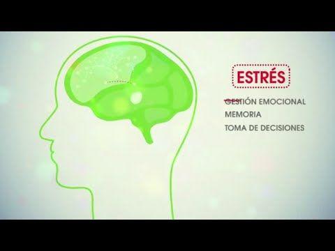 Claves de la neurociencia y su aplicación en los procesos de enseñanza-aprendizaje. #neurociencia #educación