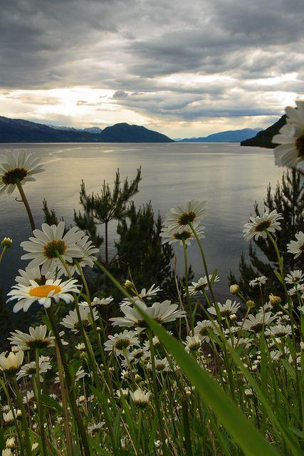 It was spring time in the fjordland, Hardanger / Norway (by... - Its a beautiful world vorrei essere disteso in questo meraviglioso campo di fiori e contemplare il tramonto per sempre.