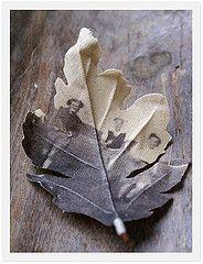 Photo transfer on leaf