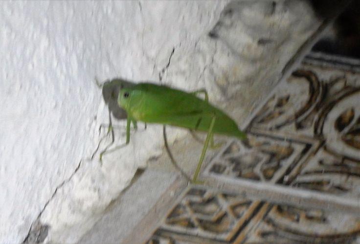 Giant harmless bug !