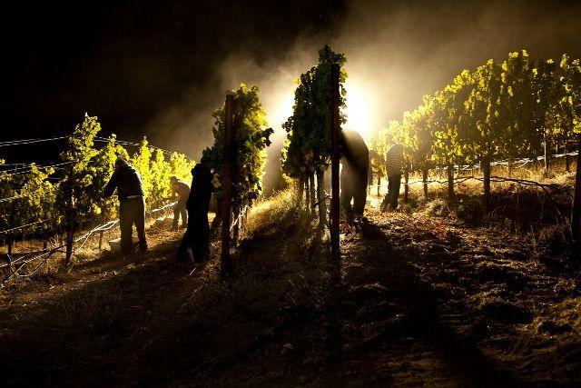Seguendo la lezione sul vino di Sicilia, tenuta da Paolo Lauciani, ho scoperto che esiste una vendemmia notturna!! Wow ho pensato. Così come sempre la mia curiosità è andata alla ricerca di questa …