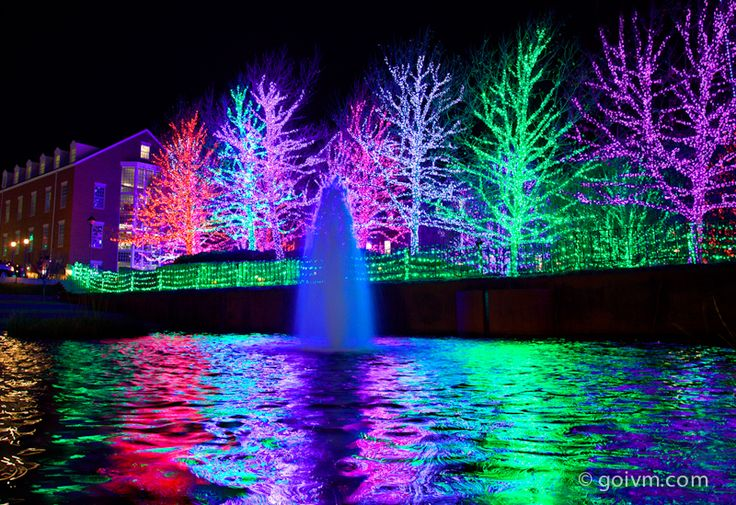 Christmas tree lights water reflection photography