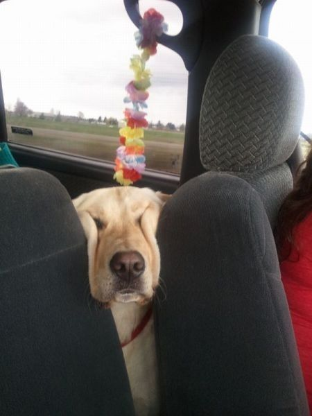 this dog knows exactly how you feel in the morning…