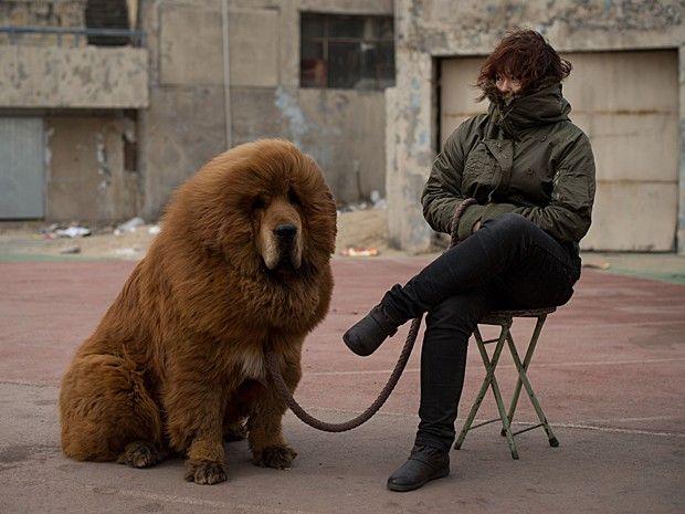 Cão é posto à venda em Baoding, ao sul de Pequim, neste sábado (9) (Foto: Ed Jones/AFP)