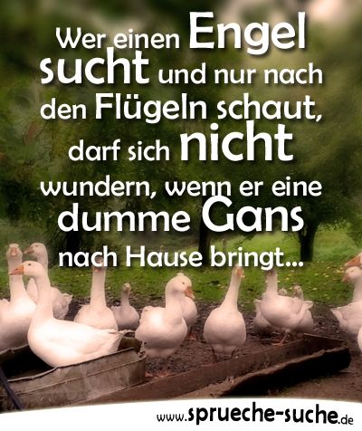 Spruch: Wer einen Engel sucht und nur nach den Flügeln schaut, darf sich nicht wundern, wenn er .... ➔ Weitere lustige Sprüche gibt's hier!