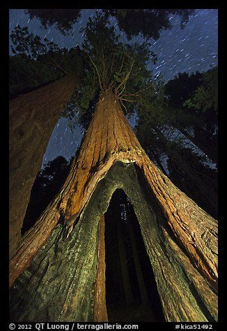Image result for Sequoia National Park, Shuman tree