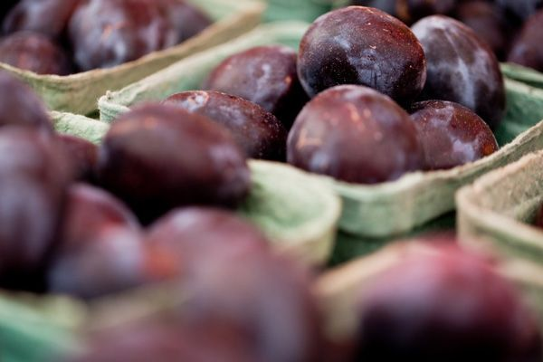 Prune Plum Marmalade - a new twist on an old fave!