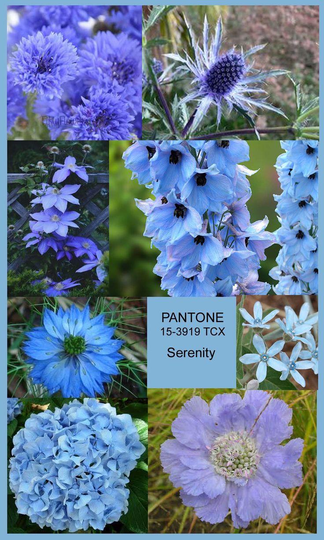 Serenity blue flowers from top left corner clockwise - cornflowers, eryngium (thistle), delphinium (larkspur), light blue tweedia, light blue scabiosa, hydrangea, nigella, and blue clematis.