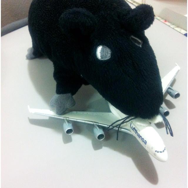 Una rata volando en un Airbus A380: Hacemos En, Hacemo En