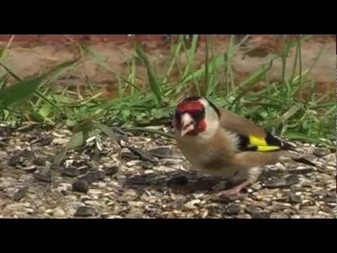 Nagyvárosi madarak