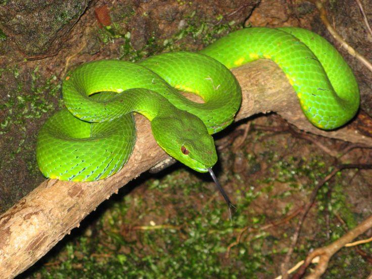 Amazon jungle rainforest animals pictures of animals in - Amazon rainforest animals wallpaper ...