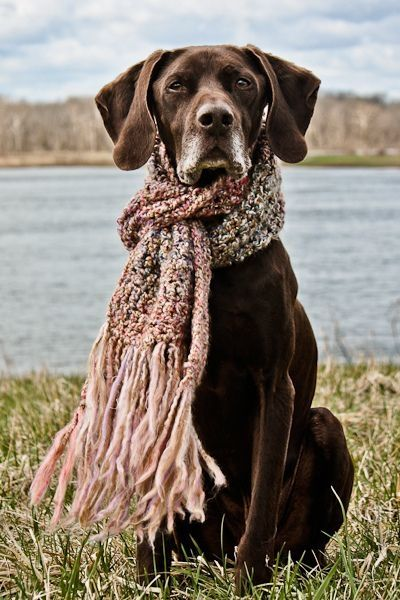 Dogs & Scarf