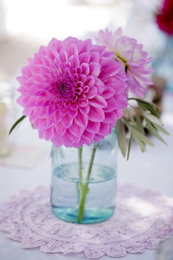 55 Best Flowers Peach Pink Amp Blush Images On Pinterest