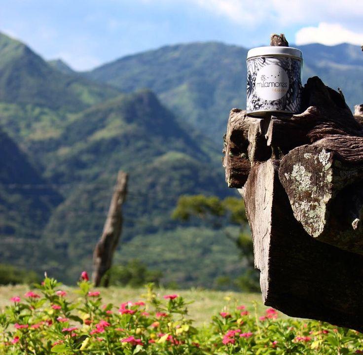 ❤️ Desde este hermoso paraíso de Antioquia les deseamos a todos un feliz día de AMOR Y AMISTAD. ❤️😘❤️ #Milamores #milamoresinfusiones