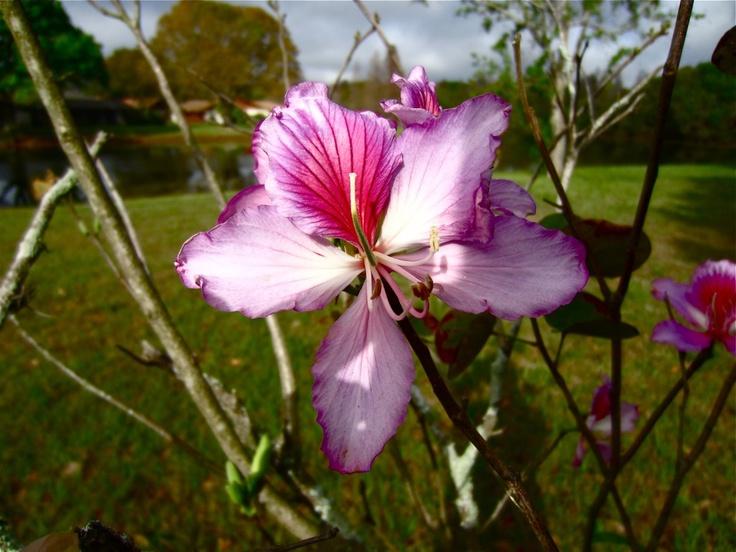 Florida FlowerGood Mornings Sunshine